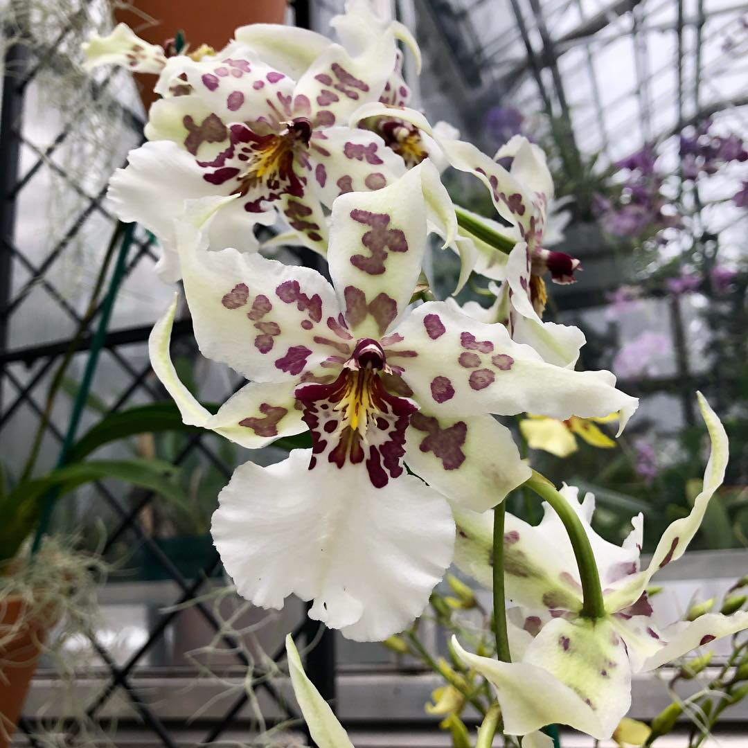 Orchid Showcase